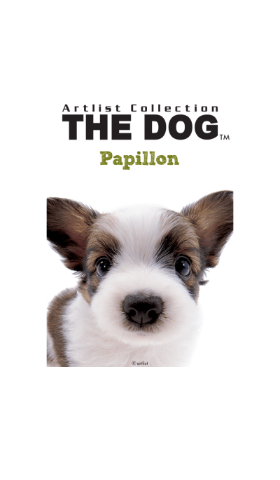 THE DOG Papillon