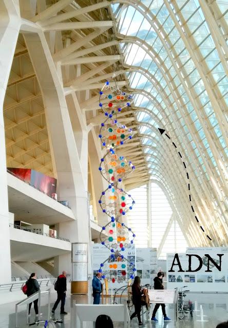 Museo Ciencias Valencia Experimentar
