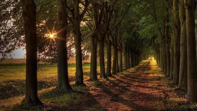 ağaçların-sırrı-çözülemeyen-özellikleri