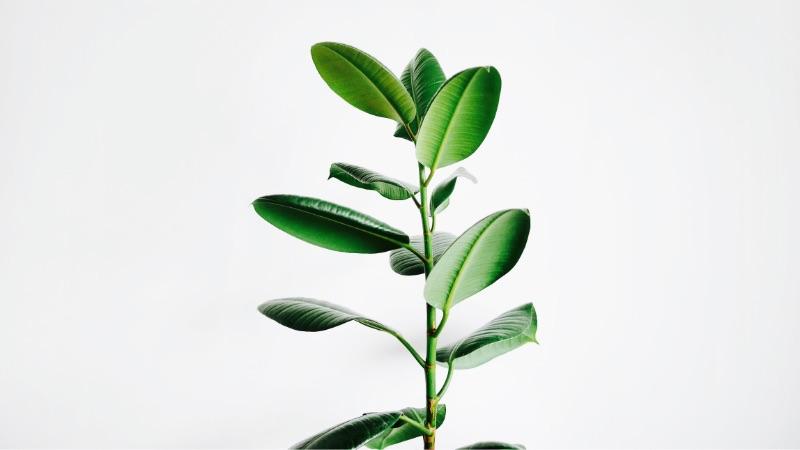観葉植物を上手に育てるコツと育てやすい観葉植物。何度も枯らした僕が身を持って知りました