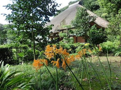 西方寺のヒガンバナ