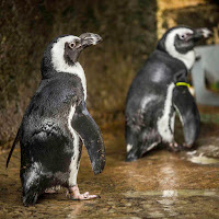 Penguins, meerkats and more near Gatlinburg