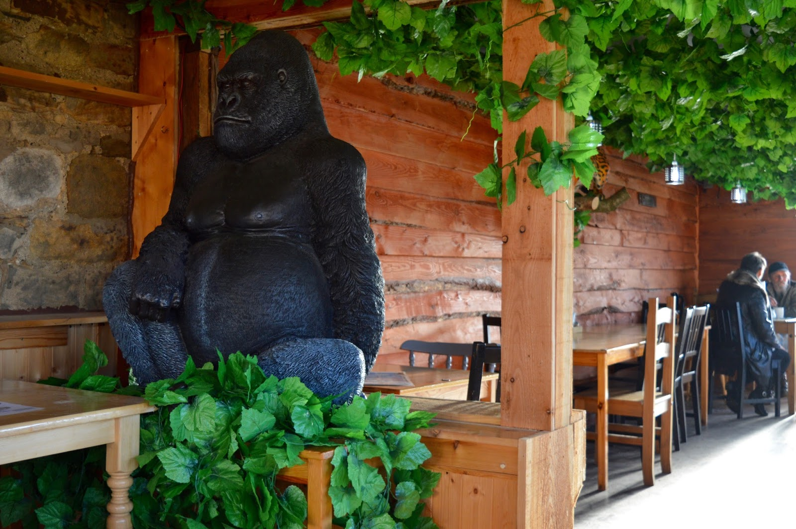 Northumberland County Zoo Reviews - gorilla in cafe