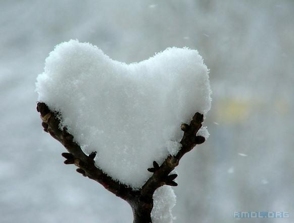 Snow Heart in a Tree's Embrace (from http://divinetheatre.blogspot.ca/2012/02/melt-with-you.html)