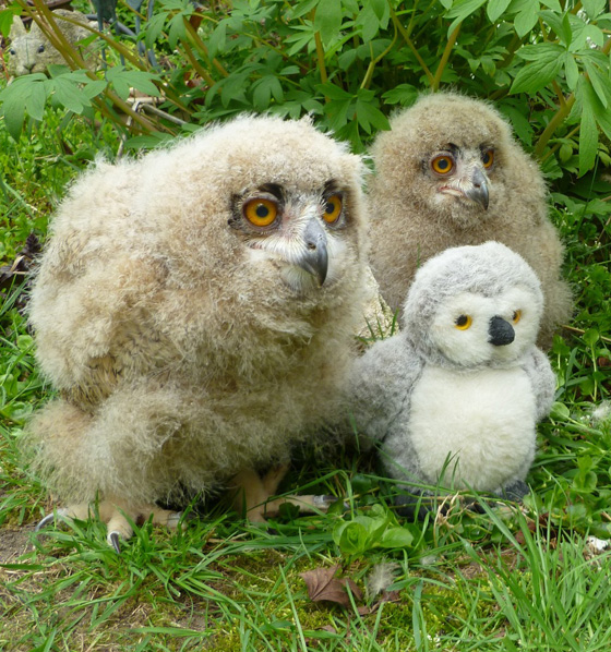 Cute Turkmenian Eagle Owlets
