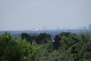 Im Vordergrund sind Baumkronen zu sehen, im Hintegrund, etwas nebelig, ist der Kölner Dom zu erkennen
