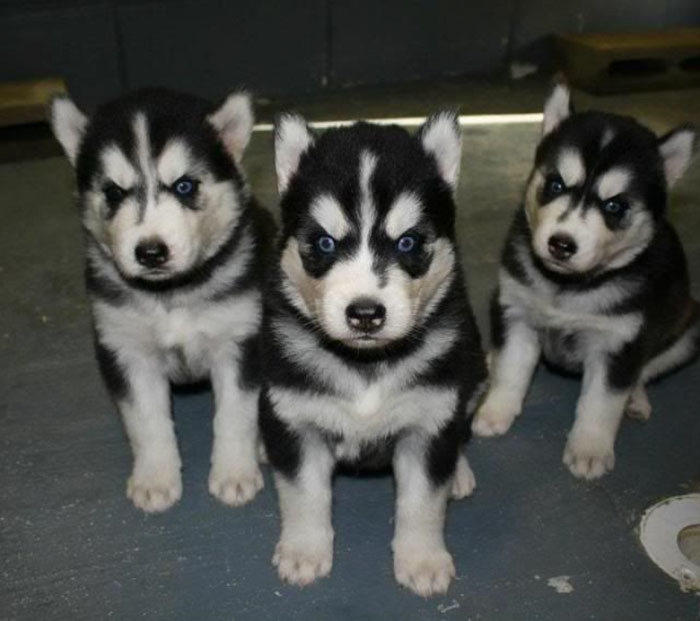 32 Animals That Look Like They're About To Drop The Hottest Albums Of The Year - Norwegian Black Metal Puppies