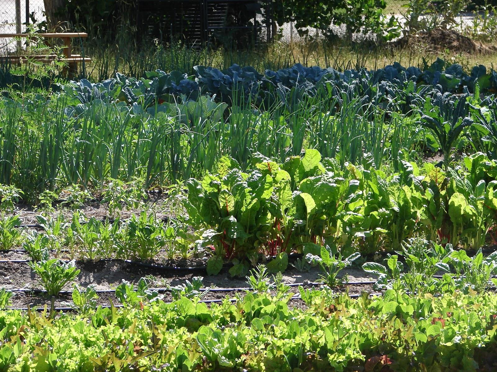 New Utah Gardener 5 Ways To Save Money In The Vegetable