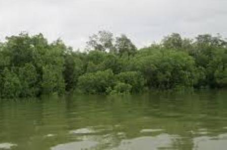 Keindahan Wisata Alam Di Palangkaraya seperti Danau Tahai, Danau Tahai'i, Taman Nasional Sebangau, Pulau Kaja, Nyaru Menteng.