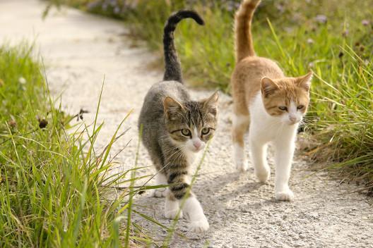 Bo za jednym kotem drugi kot...