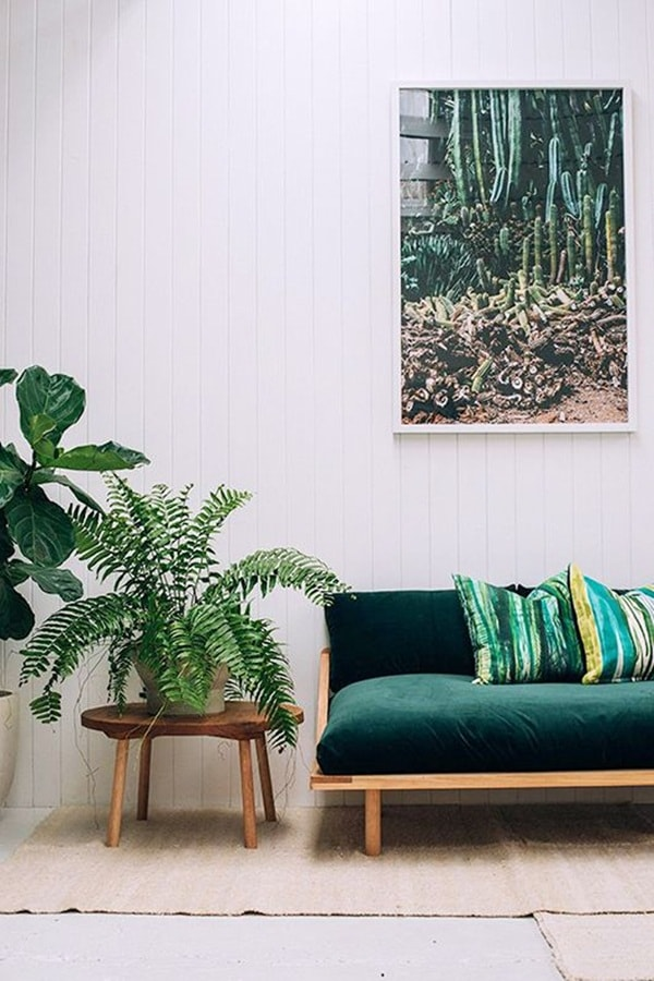 The Best Plants To Decorate Interiors 8