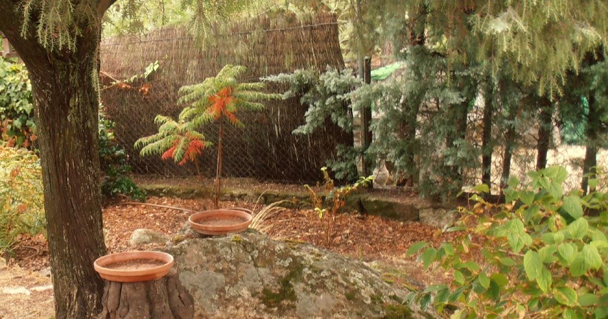 El jard n de la alegr a en el jard n presente for El jardin de la alegria cordoba