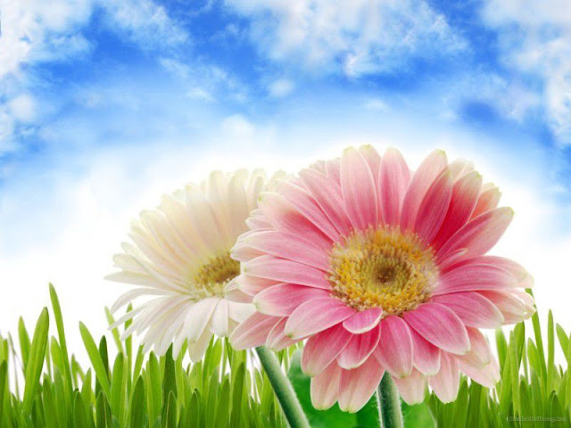 hình ảnh hoa đẹp nhất thế giới 11