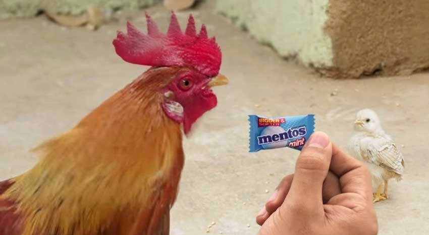 New Mentos Angry Chicken Dad Ad