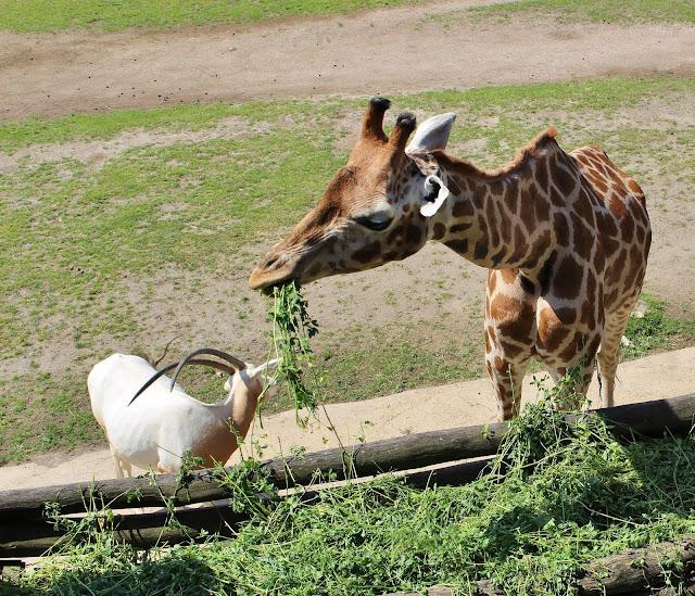 schönster Zoo Deutschlands