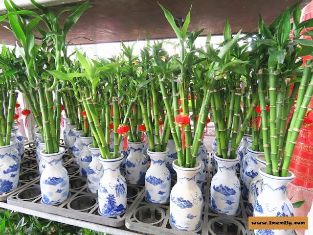 Tan Kok Leyong Nursery