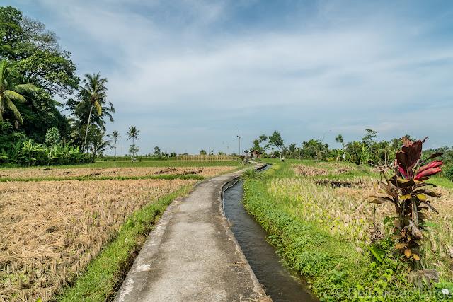 Rizières Kéliki - Ubud - Bali