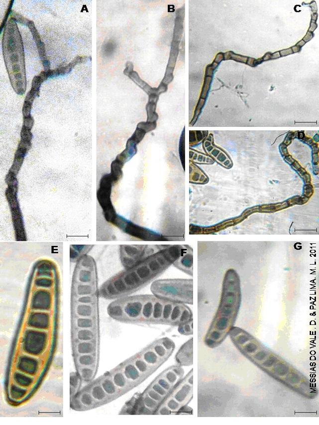 helminthosporium en trigo