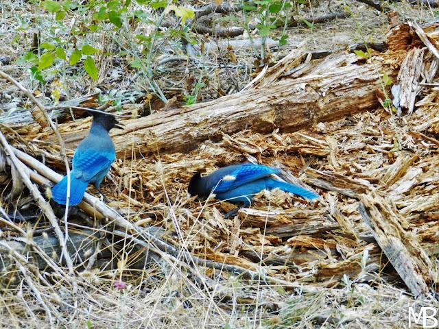 uccelli yosemite valley california