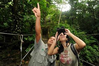 Dżungla w Panamie