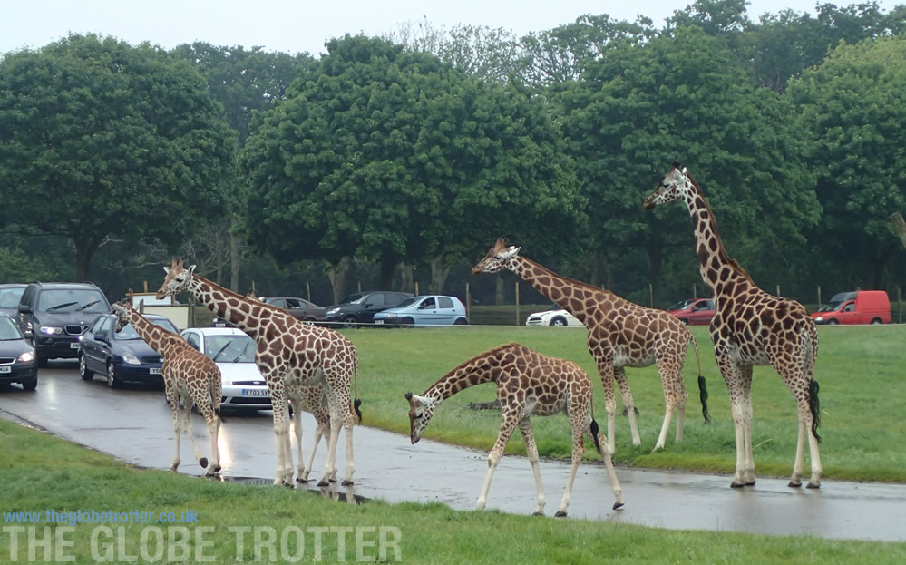 Wildlife at the Woburn Safari Park