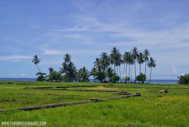 qué ver en camiguin - palmerales