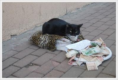 http://infomasihariini.blogspot.com/2016/10/woow-di-rusia-ada-kucing-jadi-pengemis.html