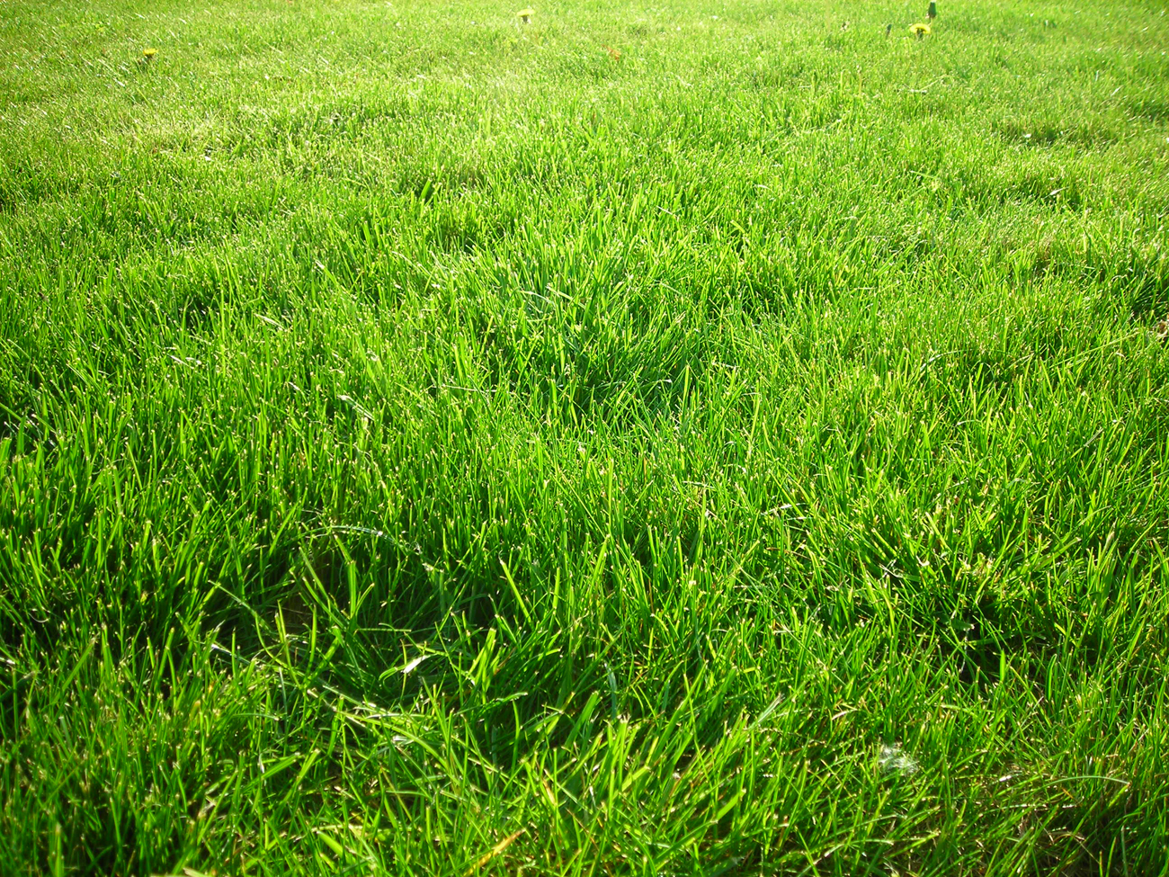 QQ Wallpapers: Grass Wallpapers