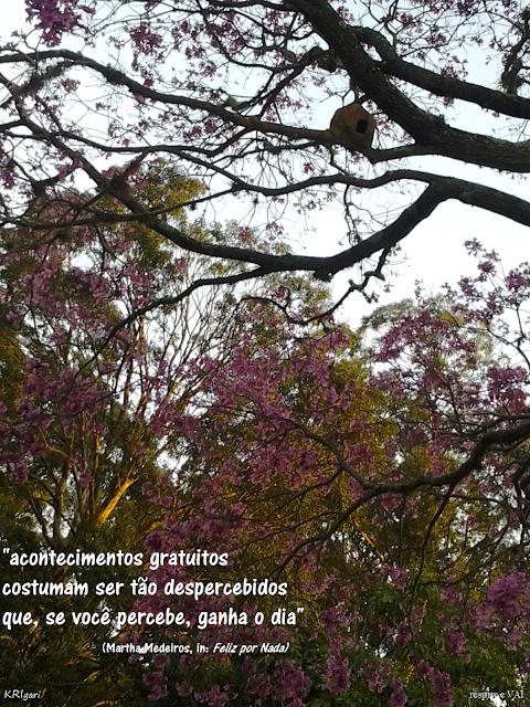 Foto particular - KRI: foto tirada no Parque do Ibirapuera