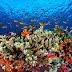 Futuro da maior Barreira de Corais do mundo está ameaçado