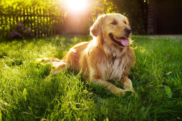 Setiap Hari Amal Berkurang Satu Qiroth, Inilah Derita Seorang Muslim Memelihara Anjing