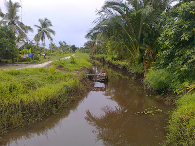 Ekosistem Rawa dan Karakteristiknya