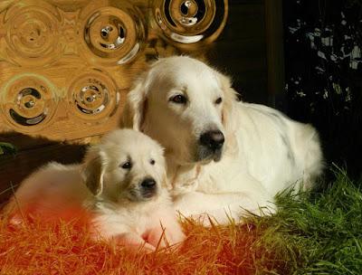 imagen de perro, imagenes de mascotas, imagenes de cachorros, imagenes de buenos dias jueves, imagenes de perritos para colorear