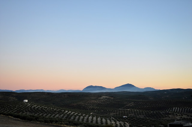 Olive groves, Martos, Jaen