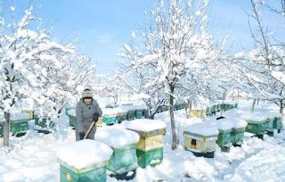 Μελισσοκομικές συμβουλές για τον μήνα Δεκέμβριο