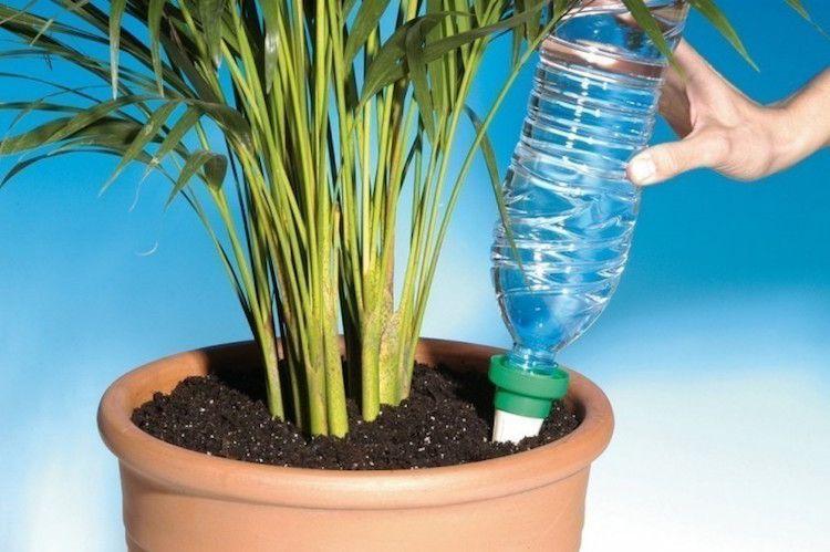 sistema riego plantas en vacaciones con una botella invertida