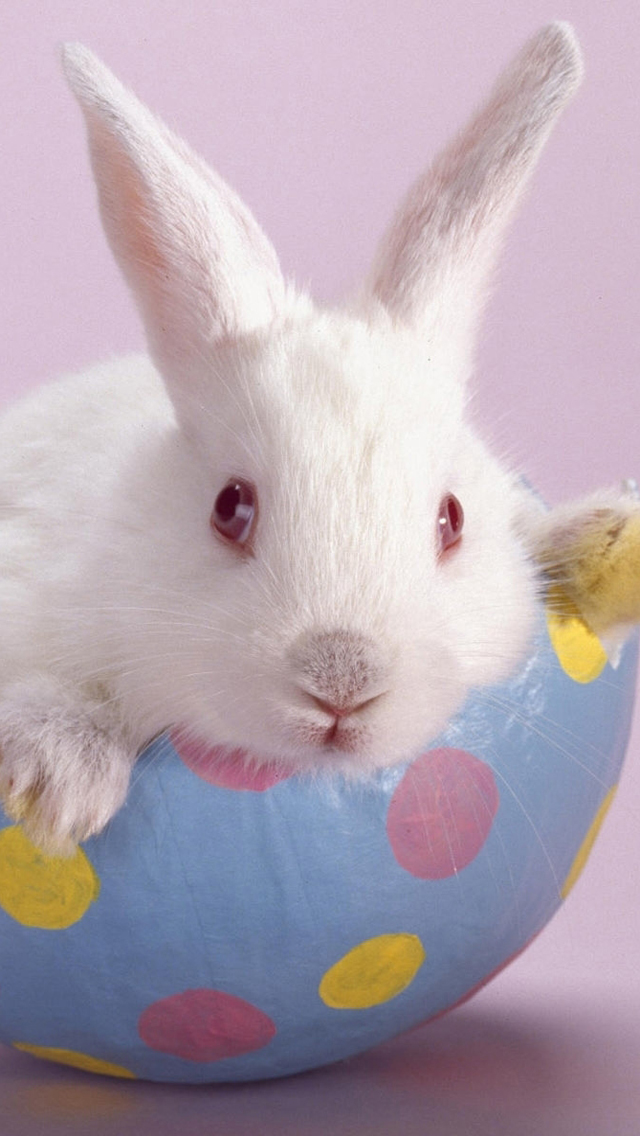 Free download cute easter bunny iphone 5 hd wallpapers - Easter bunny wallpaper ...