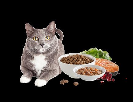 Soda Cat Spoon Pet