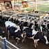 CNA e entidades discutem propostas para setor lácteo com ministra da Agricultura
