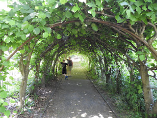 christchurch priory tree tunnel