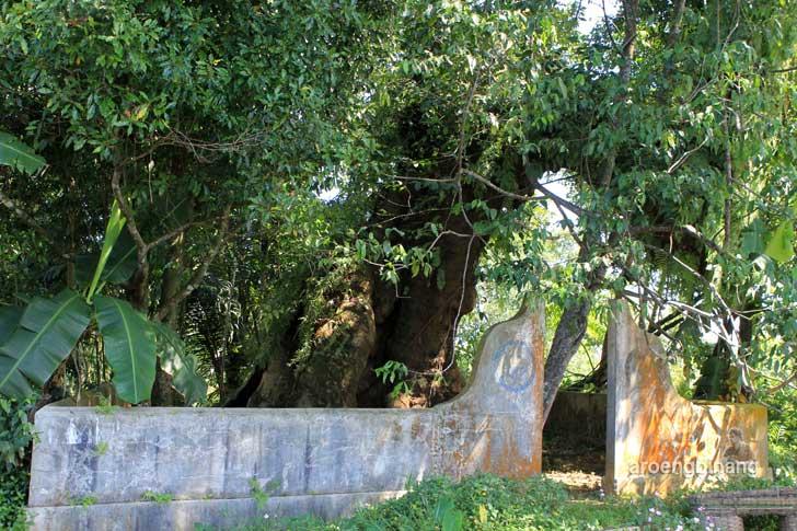 pohon tua padomasan batang