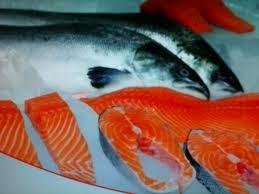 ikan-salmon
