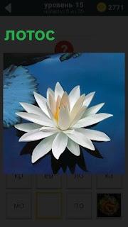 В воде растет красивый цветок лотос, который распустил свой бутон