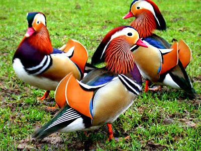 Haiwan Berwarna-warni, Kecantikan Ciptaan Ilahi