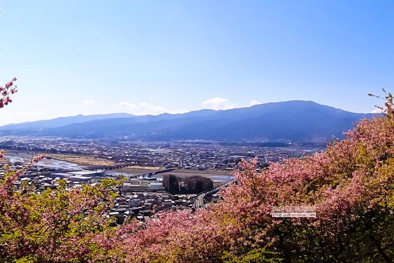 matsuda-sakura-19.jpg