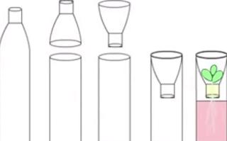 Cara Menanam Tanaman Sayuran di Botol Aqua Bekas