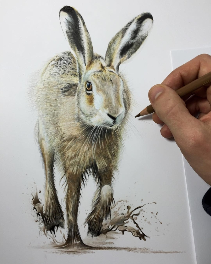 04-Hare-Paul-Miller-Wildlife-and-Domestic-Animal-Drawings-www-designstack-co