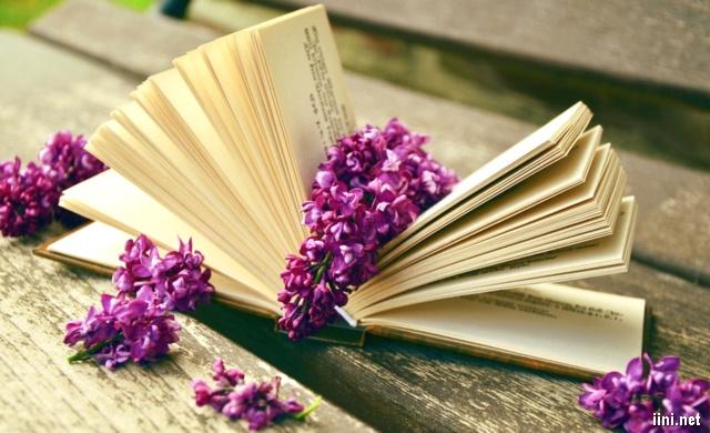 ảnh hoa tím và cuốn sách