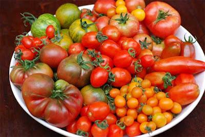 انواع الطماطم
