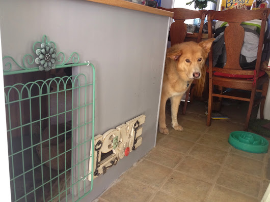 How We Got Rid of the Dog Crate